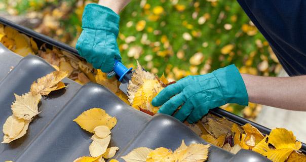 Bladene er ikke altid lige så flotte og tørre som dem på billedet, men alligevel er opgaven overkommelig, hvis du renser to gange om året.