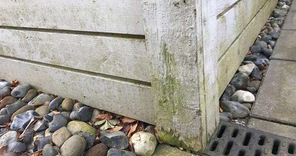 svamp i træværk