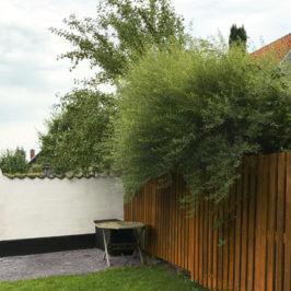 Må du save grene af naboens træer?